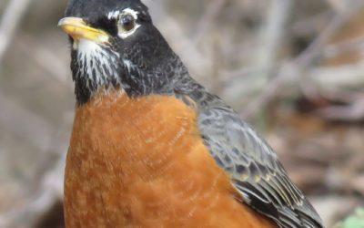 Beginner Bird Watching Walk
